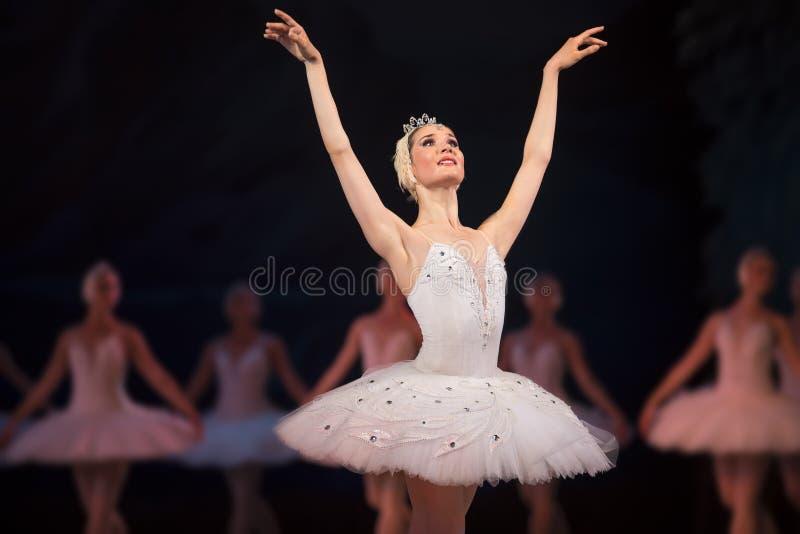 De witte zwaan van de Primaballerina stock fotografie