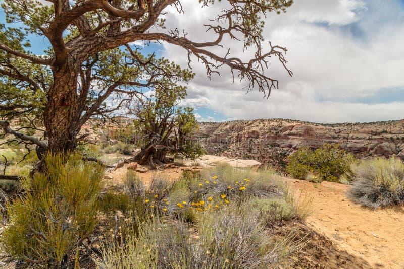 De woestijn plant dichtbij de Canion, Utah stock fotografie