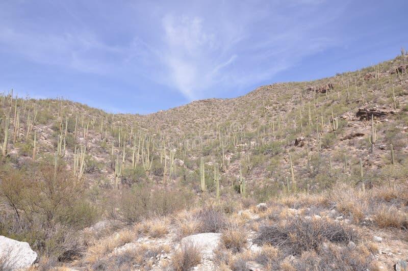 De Woestijn van Arizona stock foto