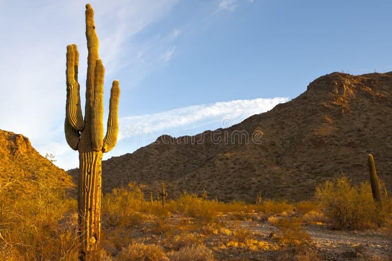 De Woestijn van Arizona royalty-vrije stock afbeelding