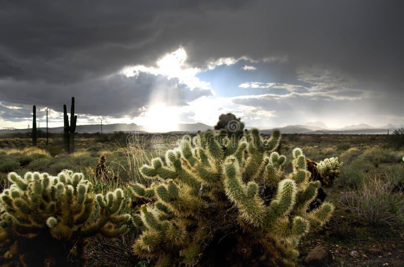 De woestijn van Arizona royalty-vrije stock fotografie