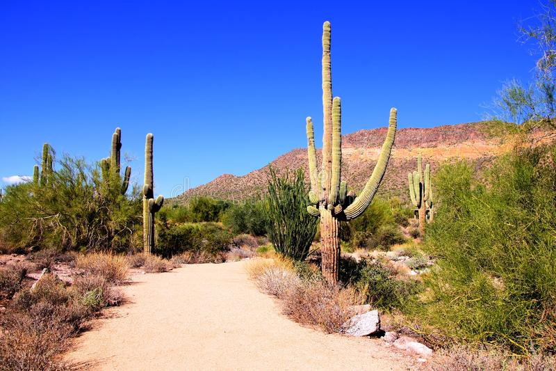 De woestijn van Arizona royalty-vrije stock afbeeldingen