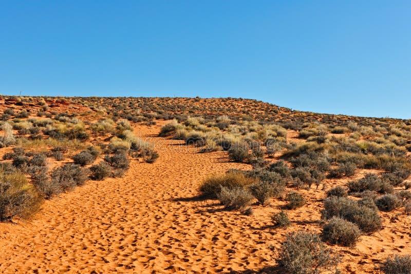 De woestijn van Arizona toneel stock afbeelding