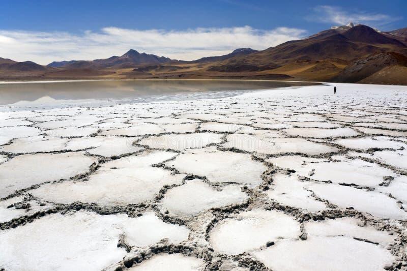De Woestijn van Atacama in Chili stock foto