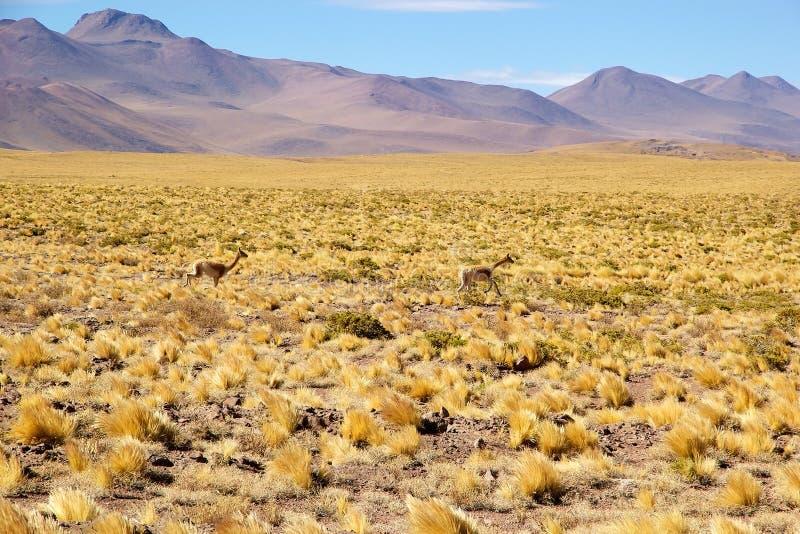 De Woestijn van Atacama, Chili stock foto