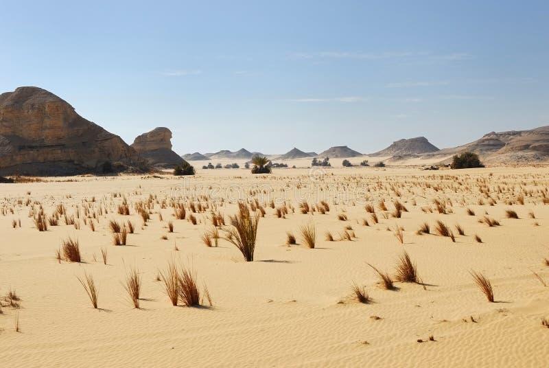 De Woestijn van de Sahara, Egypte royalty-vrije stock afbeelding