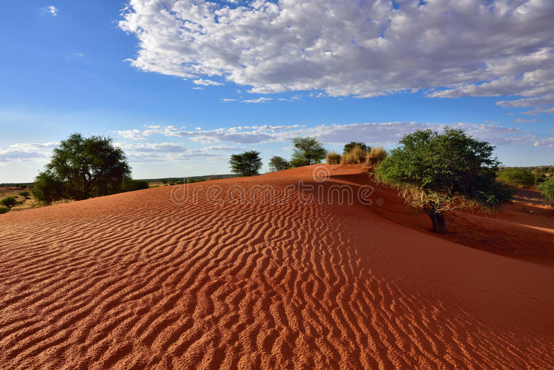 De Woestijn van Kalahari, Namibië stock foto