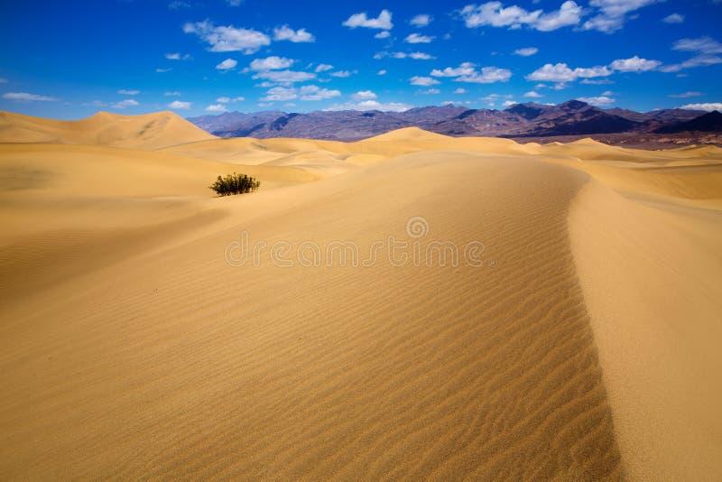 De woestijn van Mesquiteduinen in het Nationale Park van de Doodsvallei royalty-vrije stock afbeeldingen