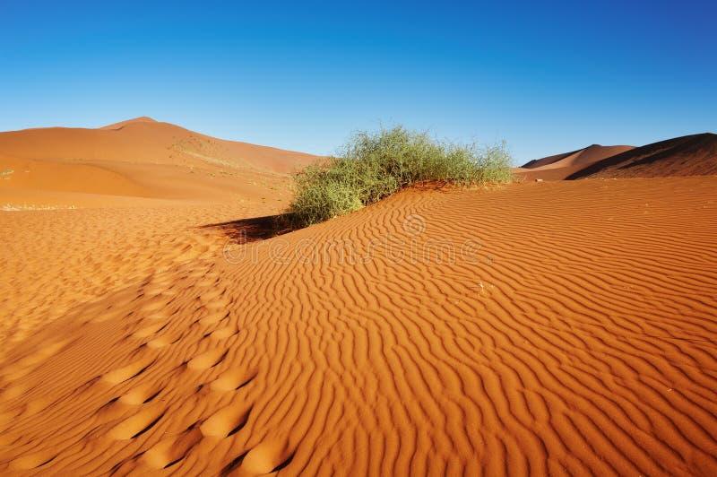 De Woestijn van Namib stock foto's