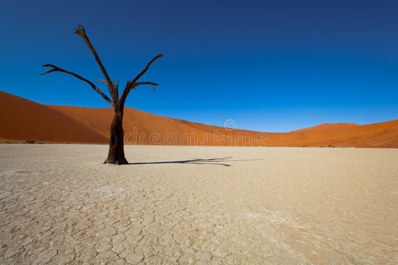 De woestijn van Namibië stock afbeelding