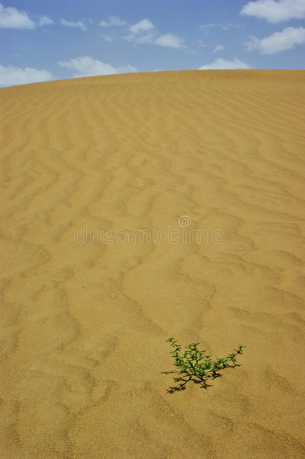 De Woestijn van Taklimakan royalty-vrije stock foto's