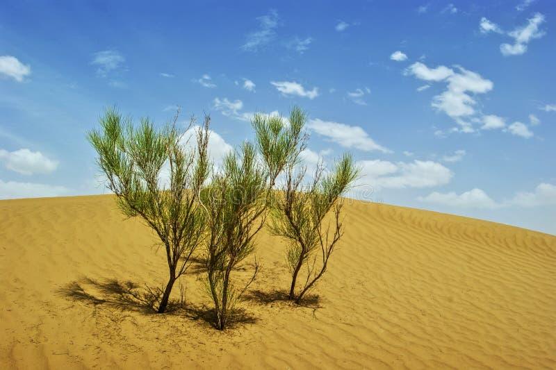 De Woestijn van Taklimakan stock foto's