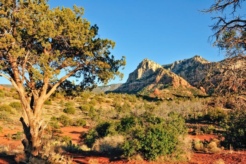 De woestijnlandschap van Arizona stock foto's