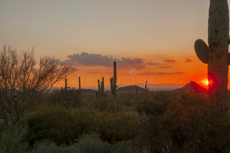 De Woestijnzonsondergang van Arizona Senoran stock fotografie