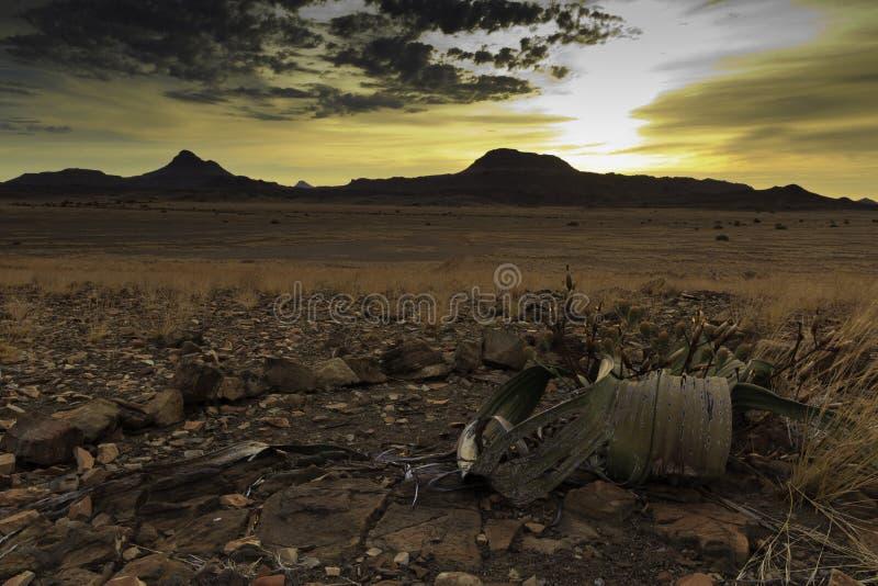 De woestijnzonsondergang van Namib stock foto's