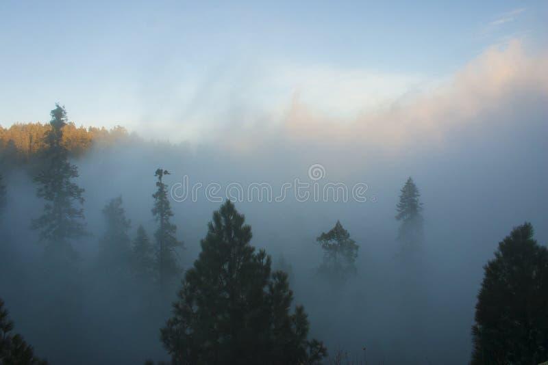 In de wolken bovenop de berg Sierra Nevada is mou stock afbeeldingen