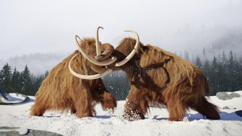 De wollige mammoetstierengevechten, voorhistorische ijstijdzoogdieren in sneeuw behandelden landschap stock afbeelding