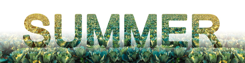De woordzomer op de achtergrond van koolaanplanting De wintergewassen Seizoen van het jaar, actieve fase van het groeien, het oog stock foto