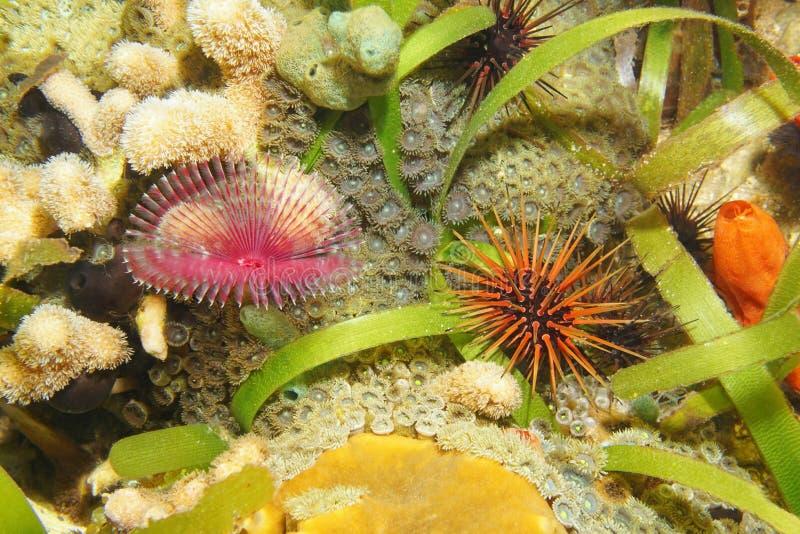 De worm van het veerstofdoek en het Caraïbische overzees van de ertsaderjongen stock foto's