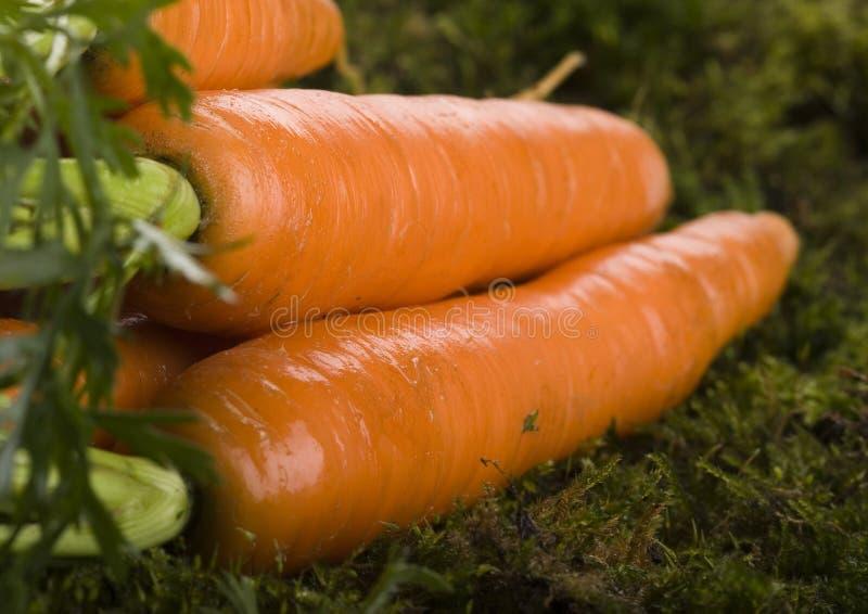 De wortelen royalty-vrije stock afbeelding