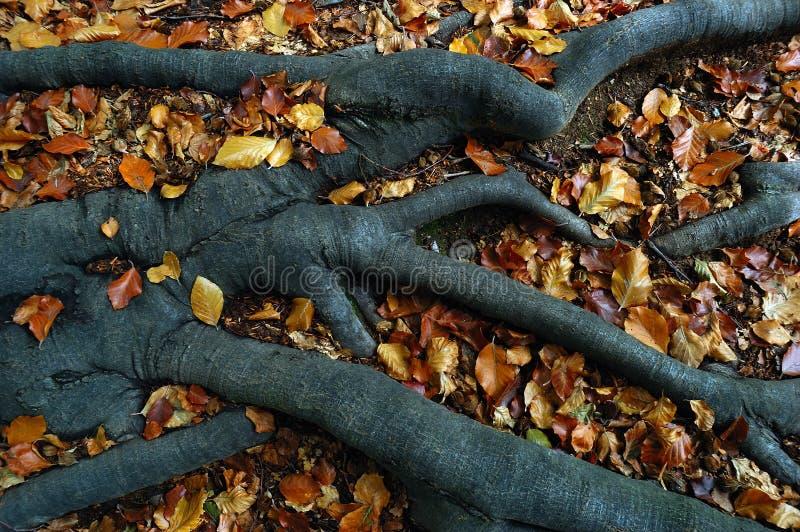 De wortels van bomen royalty-vrije stock foto's