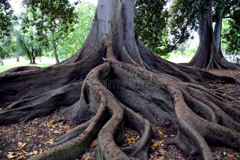 De wortels van bomen