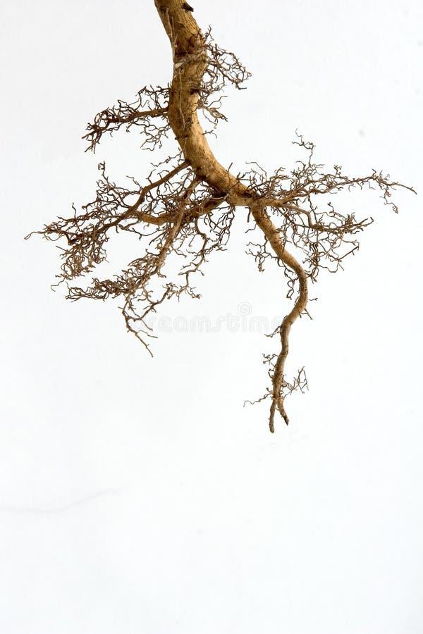 De wortels van de boom stock foto's