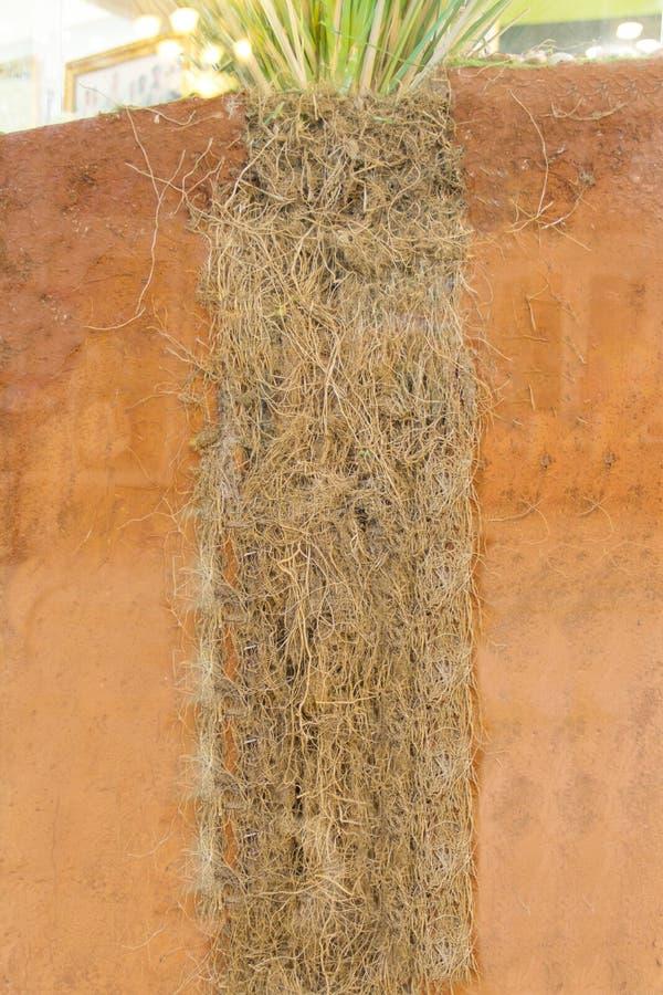 De wortels van Vetiveria zizanoïdes royalty-vrije stock foto