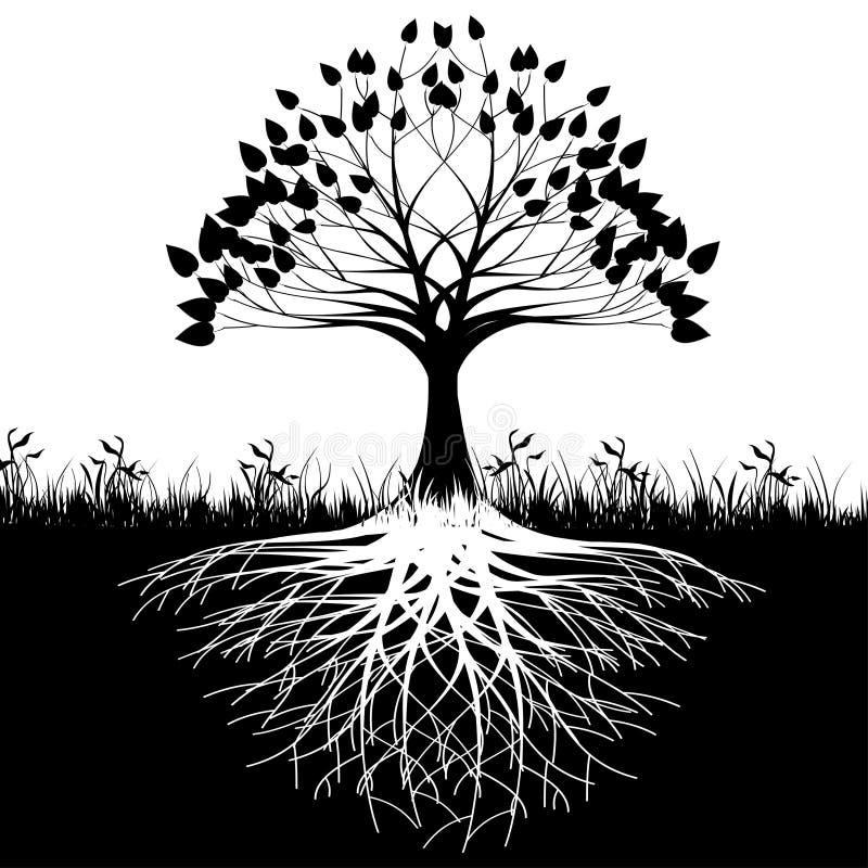 De wortelssilhouet van de boom royalty-vrije illustratie