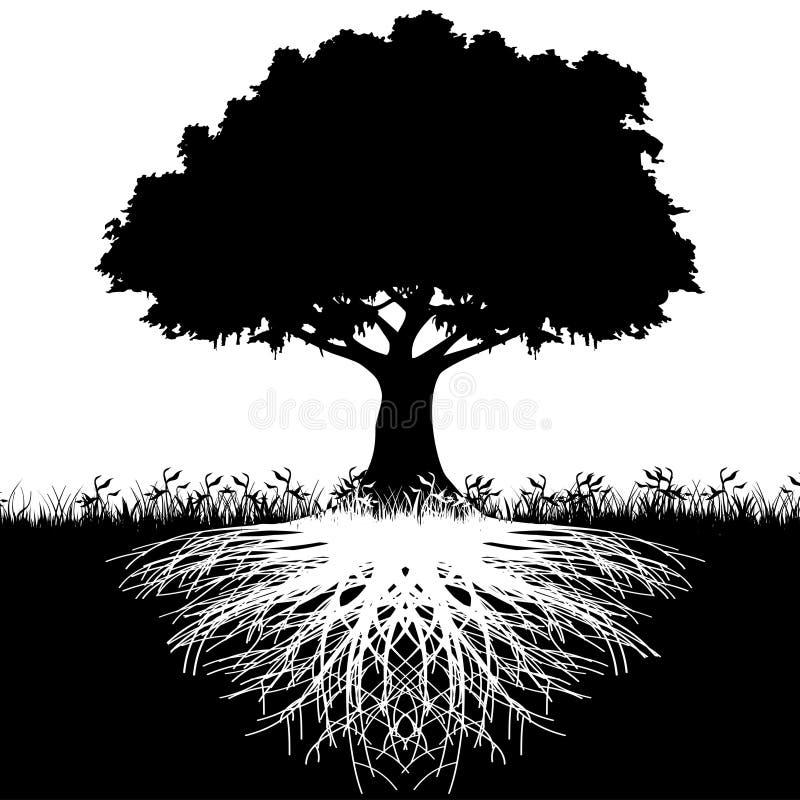 De wortelssilhouet van de boom
