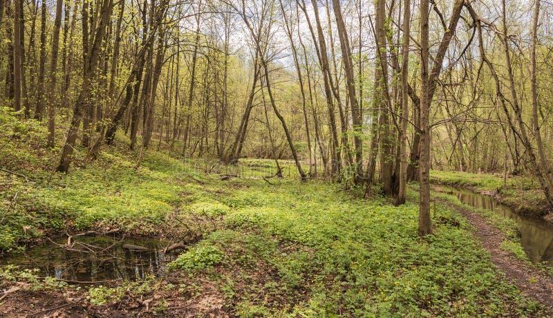 De Yazvenka-rivier die door het grondgebied van het Tsaritsyno-landgoed vloeien moskou Russische Federatie stock afbeeldingen