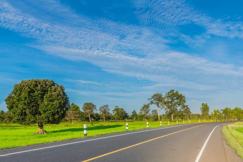De zachte nadruk van de weg, het groene padiepadieveld met de mooie hemel en de wolk in de middag Thailand, de straal, licht, royalty-vrije stock afbeelding