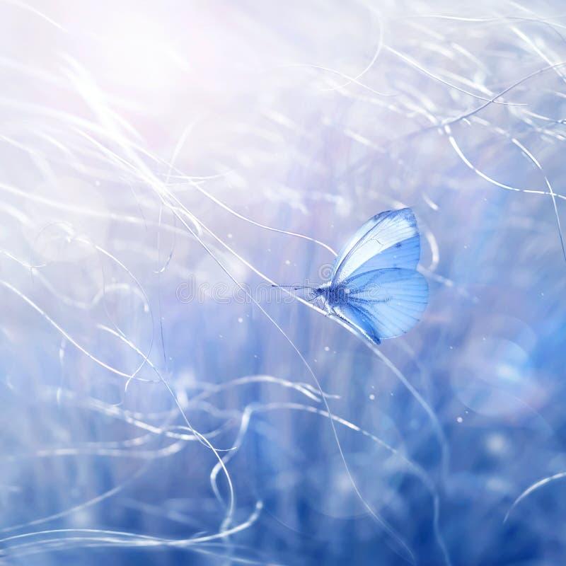 De zachte natuurlijke achtergrond van de de zomerlente Mooie vlinder op fantastisch gras Vrije ruimte voor tekst artistiek creati royalty-vrije stock afbeelding
