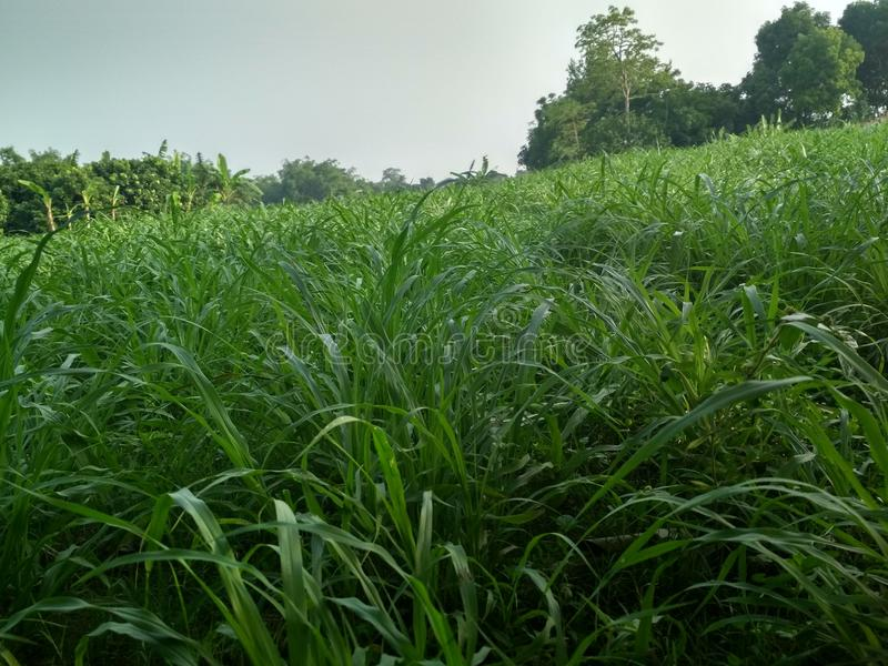 de zachte verfrissende wildernis van de grasaard royalty-vrije stock foto