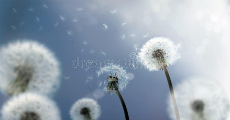De Zaden die van de paardebloem in de Wind vliegen vector illustratie