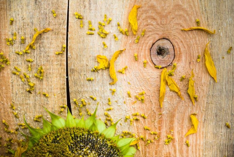 De zaden houten countertop van de achtergrondbloemzonnebloem stock fotografie