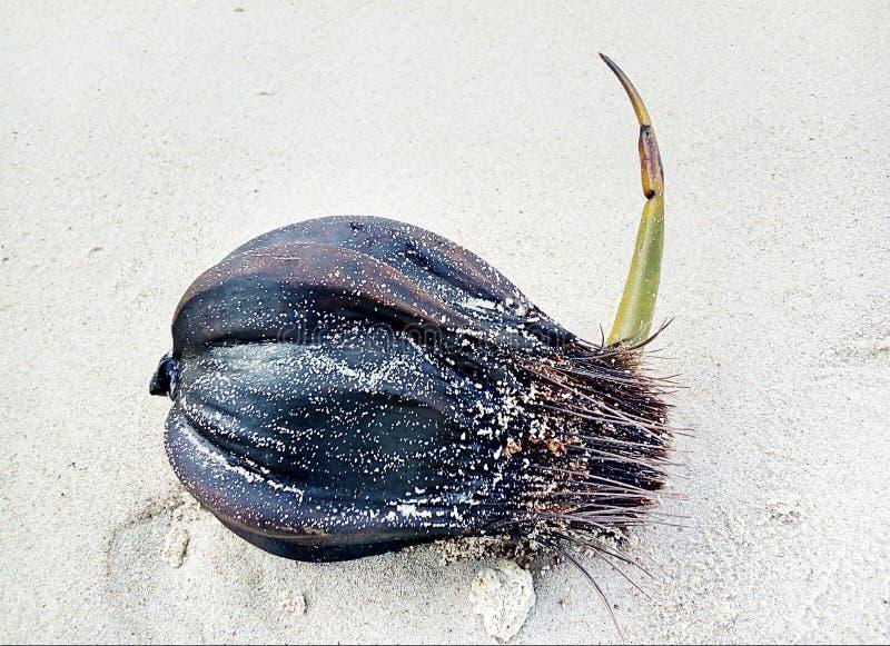 De zaden ontkiemen op het Strand stock afbeeldingen