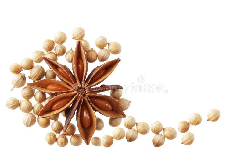 De zaden van de anijsplant en van de Koriander stock afbeelding