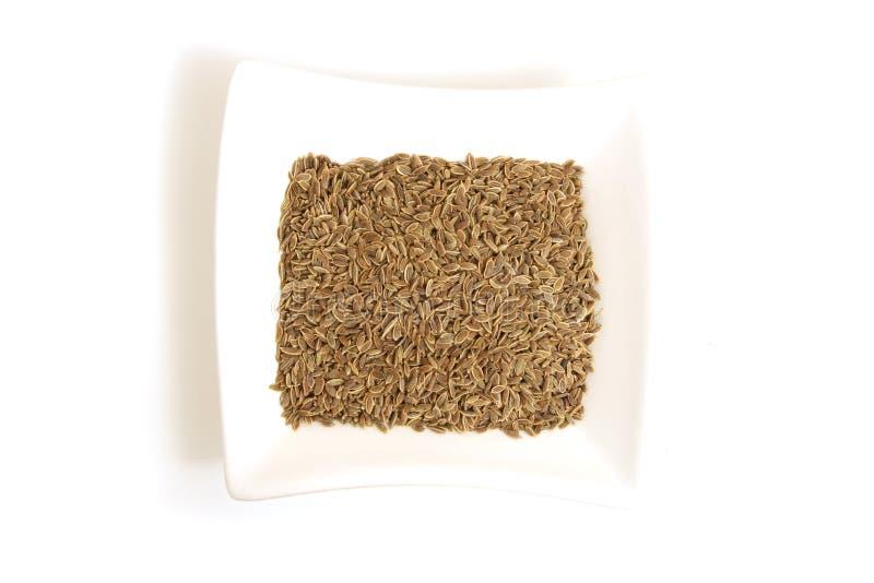 De zaden van de dille in vierkante witte kom royalty-vrije stock afbeelding