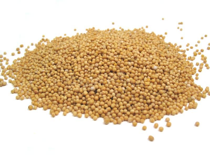 De zaden van de mosterd stock afbeelding