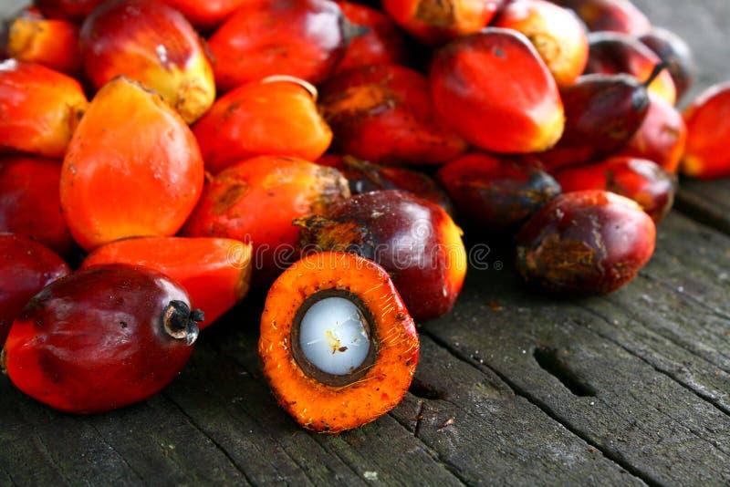 De Zaden van de Palm van de olie stock foto's