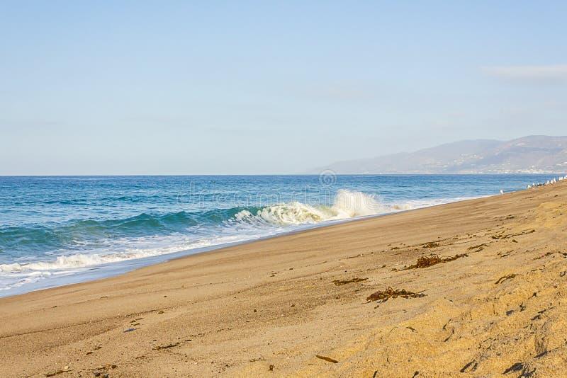 De zandige strandmening van golf zwelt en breekt, zeewier en zeemeeuw, tegen horizon royalty-vrije stock afbeelding