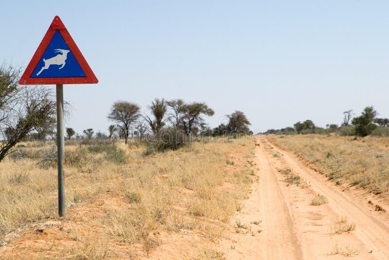 De zandige weg van Kgalagadi N.P. aan Ghanzi stock afbeeldingen