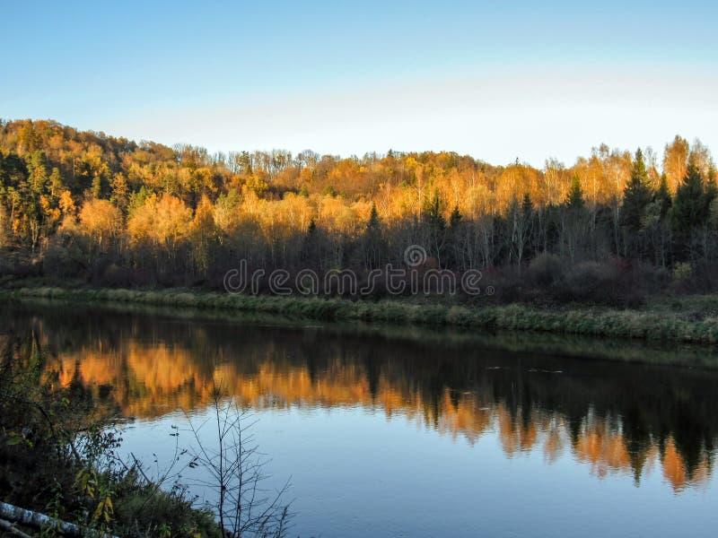 De de de de de zandsteendagzomende aardlagen, klippen, rotsen en holen langs steile Gauja-rivierbanken en herfst kleurden bomenbe stock fotografie