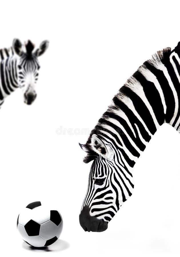 De zebra van Zuid-Afrika en voetbalbal royalty-vrije stock foto