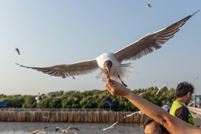 De zeemeeuw ontvangt voedsel van toeristen royalty-vrije stock afbeelding