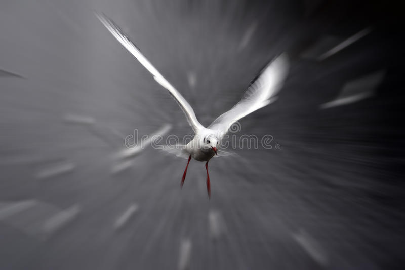 De zeemeeuw van de vogel stock foto