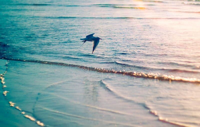 De zeemeeuw van de vogel royalty-vrije stock foto's