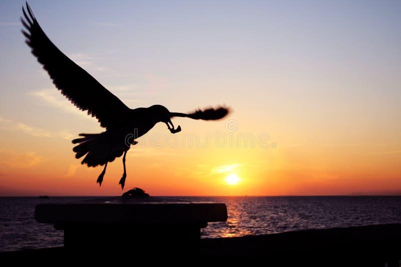 De Zeemeeuw van de zonsondergang royalty-vrije stock foto's