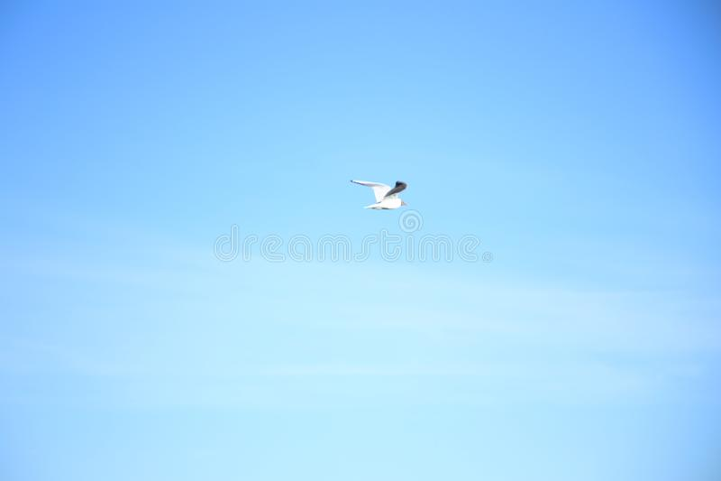 De zeemeeuw vliegt in de hemel royalty-vrije stock foto's